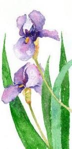 Barbara Easley Watercolors