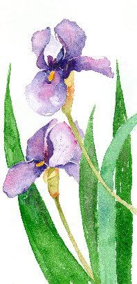 Barbara Easley Watercolors