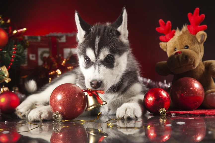 dangers-to-pets-during-holiday-season-02