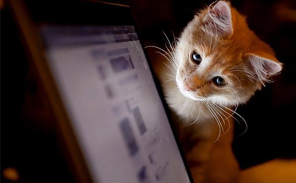 internet-cat-video-festival