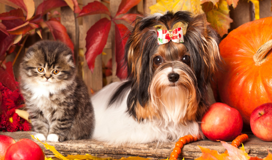 pet-safety-thanksgiving-01