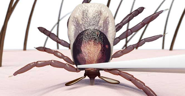 protecting-pets-from-lyme-disease-04