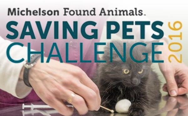 saving-pets-challange-2016