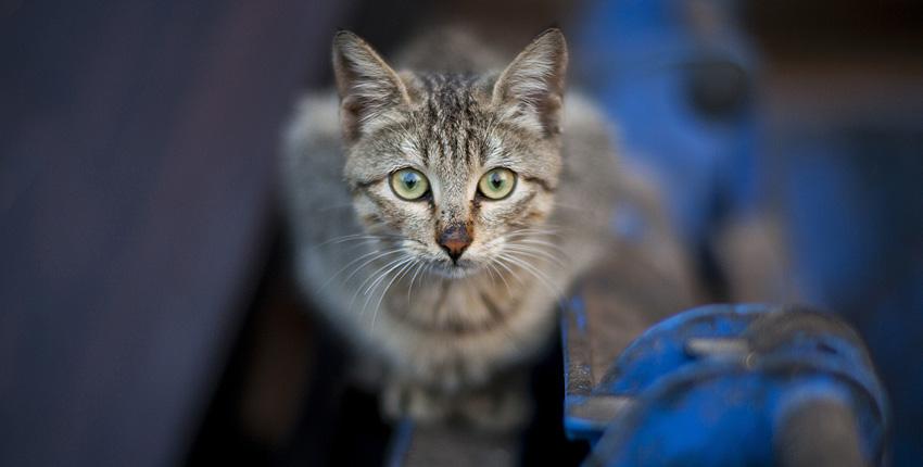 understanding-feral-cats-01