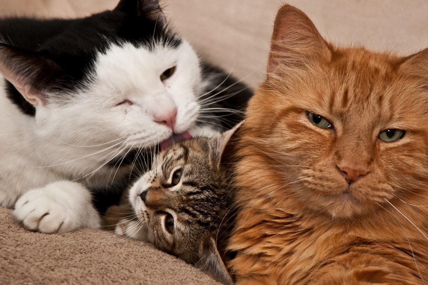 understanding-feral-cats-02