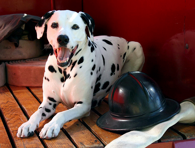 whats-your-pet-fire-safety-plan-02