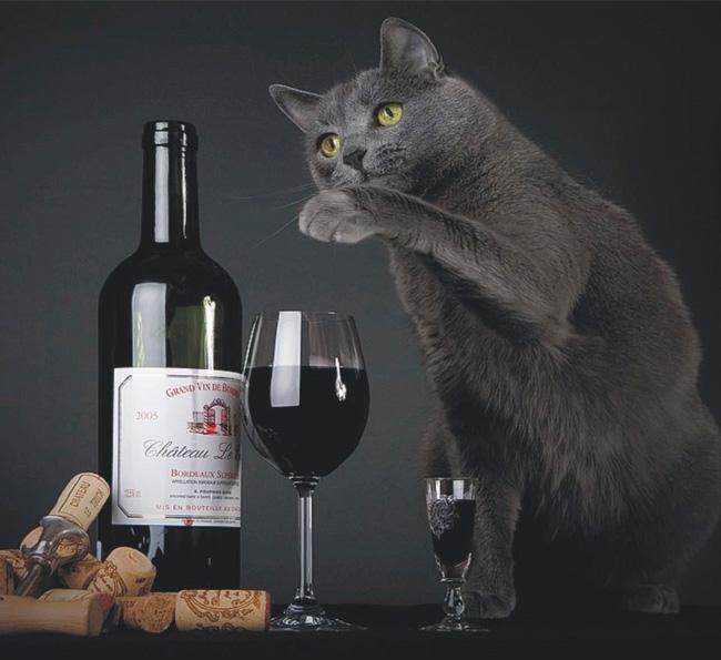wine-walk-wednesday-cat